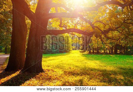 Fall Landscape Scene. Fall Trees In Sunny October Park Lit By Evening Sunshine. Colorful Fall Landsc