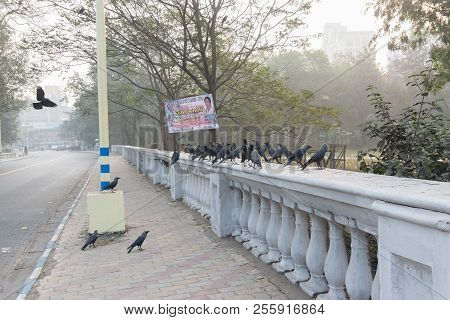 Kolkata, West Bengal , India - January 17th 2016 : Crow Birds Sitting On Fence Beside Road At Kolkat