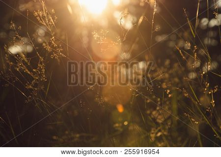 Nature Meadow Sunlight. Bright Sunny Day In Meadow Background. Close Up Of Forest Flowers.herbs In N