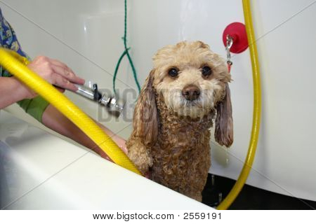 Getting Clean