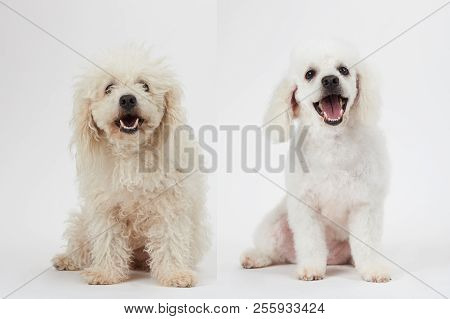 Dog Grooming Theme Image Photo Free Trial Bigstock