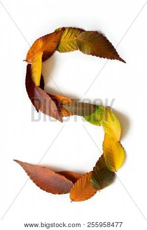 Letter S of colorful autumn leaves. Character S mades of fall foliage. Autumnal design font concept. Seasonal decorative beautiful type mades from multi-colored leaves. Natural autumnal alphabet.