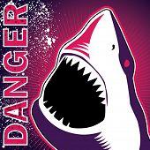 Designed banner with dangerous shark. Vector illustration. poster