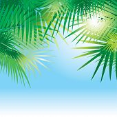 tropical vector background with leaves of palm trees poster