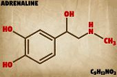 Detailed infographic illustration of the molecule of Adrenaline. poster