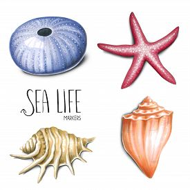 Sea Life On White Background. Sketch Done In Alcohol Markers. You Can Use For Greeting Cards, Poster