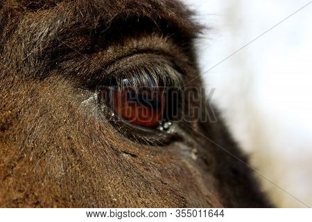 Animals, Pets, Farm Concept. Cropped Shot Of Donkey. Donkey Head, Close Up.