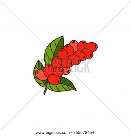 Coffee Branch With Leaves And Ripe Berries. Color Illustration On A White Background For The Store,