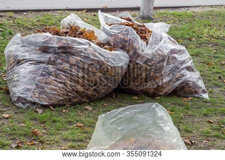 A Pile Of Yellow And Orange Fallen Leaves Is Collected In Large Transparent Plastic Bags On The Gree