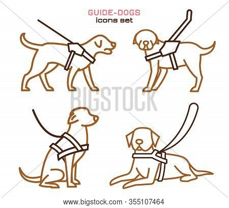 Guide Dogs With Harness. Mobility Aid. Support, Assistance, Service Animal. Guide-dog Training. Simp