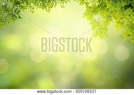 Leaf Background Bokeh Blur Green Background Green Background