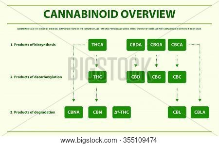 Cannabinoid Overview Horizontal Infographic Complete