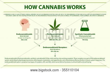 How Cannabis Works Horizontal Infographic