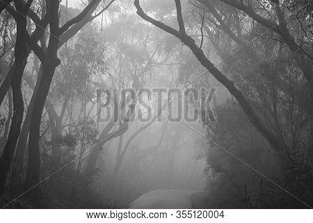 Misty Road Through Bush Land In Blue Mountains, Australia