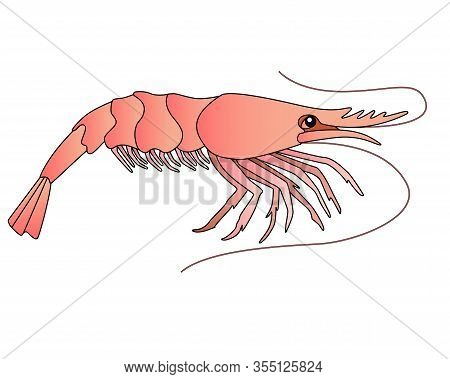 Shrimp - A Small Marine Crustacean Living Underwater - A Vector Full-color Picture In A Cartoon Styl
