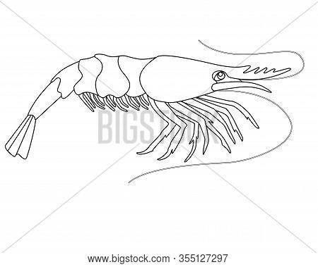 Shrimp - A Small Marine Crustacean Living Underwater - A Vector Linear Picture For Coloring. An Anim