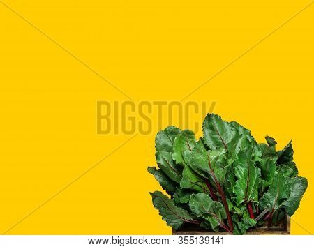 Bunch Of Fresh Beet Greens Chard Collard Leafs Known As Leafy Greens On Yellow Background. Healthy P