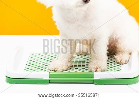 Cropped View Of Havanese Dog Sitting On Pet Toilet On White Surface Isolated On Yellow