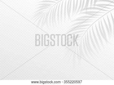 The Transparent Shadow Overlay Effect. Tropic Leaf. Mockup With Overlay A Palm Leaf Shadow. Vector I
