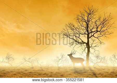 Conceptual Deer Stag , A Dry Tree As Red Deer Stag.