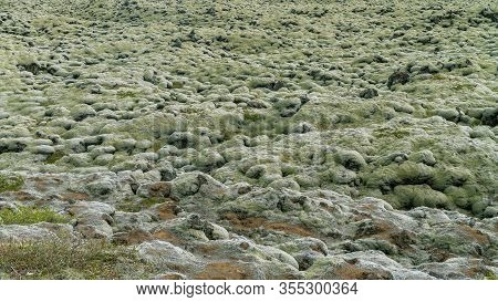 Moss Covered Lava Fields, Also Known As Green Lava In Skaftareldahraun, Iceland