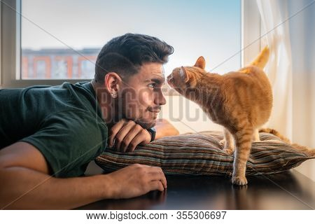 Tabby Cat Approaches A Young Man Lying On A Cushion And Sniffs His Face