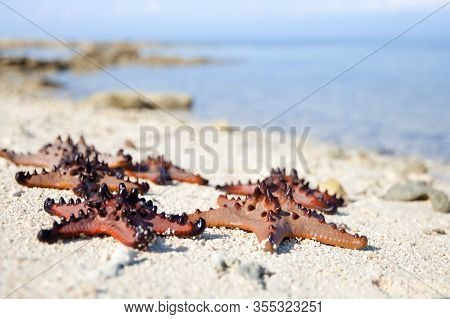Starfish On The Beach, Closeup. Starfish On Sand With Turquoise Water Background