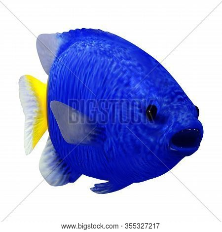 3D Rendering Yellowtail Fish On White