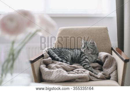 Cat Portrait. Cute Cat Indoor Shooting. Home Pet Cute Kitten Cat Lying In The Chair With Funny Looki