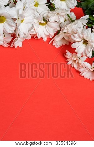 Fresh White Chrysanthemums On A Red Background