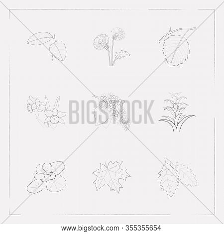 Set Of Botany Icons Line Style Symbols With Maple, Guzmania, Dandelion Icons For Your Web Mobile App