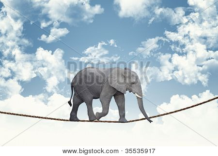 classic african elephant on rope poster