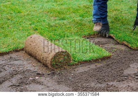 Man Laying Grass Green Rolls For New Garden Lawn