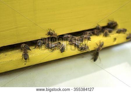 Honeybees On The Beehive