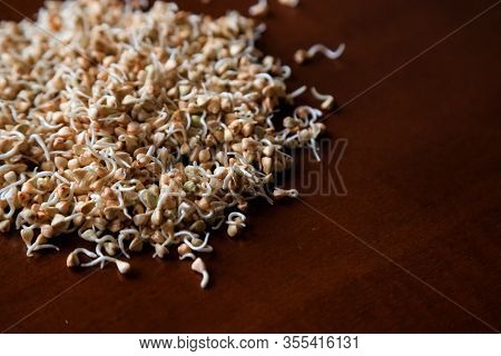 Sprouts And A Very Useful Green Buckwheat. Close-up Green Buckwheat Sprouts. Concept Of Healthy Nutr
