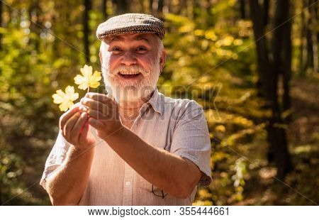 Autumn Brings Much Joy. Happy Pensioner Collect Autumn Leaves In Wood. Aged Person Happy Smiling On