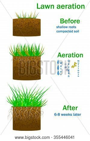 Lawn Aeration Infographics Isolated On White Background. Before And After Aeration. Enrichment With
