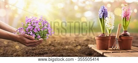 Planting Flowers In Sunny Garden. Spring Gardening Works Concept