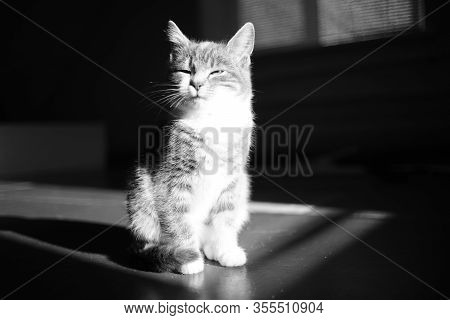 Sleepy Kitten Sits In A Dark Room In A Full Moon. Light And Strong Shadow. Bw