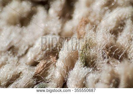 Carpet Fibers, Close Up Carpet, Carpeting Details