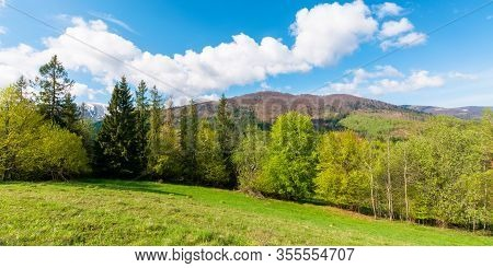 Panoramic Landscape In Springtime. Row Of Trees On The Meadow. Mountain Ridge Beneath A Blue Sky Wit