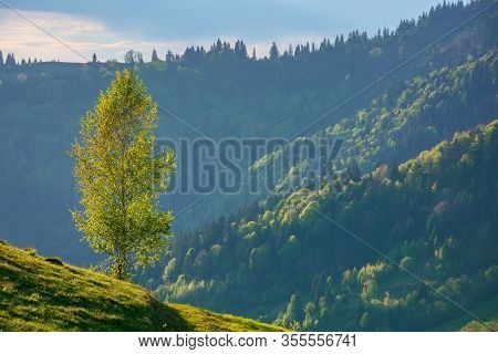 Tree On The Hill In Evening Light. Green Grass On The Steep Slope. Beautiful Mountain Landscape In S