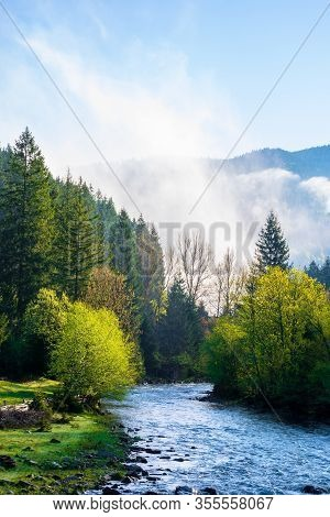 Mountain River On A Misty Sunrise. Fantastic Nature With Fog Rolling Above The Trees In Fresh Green