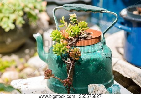 Reused Planter Ideas. Second-hand Kettles, Saucepans, Old Teapots Turn Into Garden Flower Pots. Recy