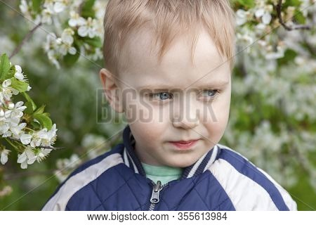 Close-up Portrait Of Cute Blond Baby Boy Frowning In The Middle Of Cherry Blossom Garden. Allergy Il