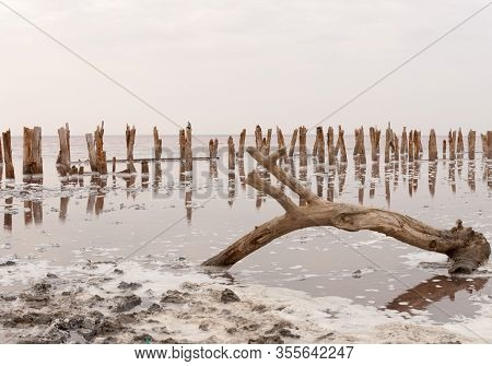 An Old Abandoned Tree On The Shore Of A Pink Crimean Lake.