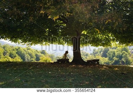 Woman Under The Shade Of A Tree. Woman Sits On The Home-made Bench In Shade Of The  Tree. She Rests