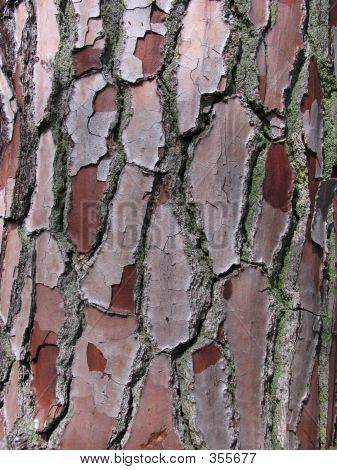 Closeup Of Pine Tree Bark