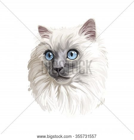 Ragdoll Kitten Digital Art Illustration. Domesticated Catty With Long Fur And Blue Eyes. Watercolor