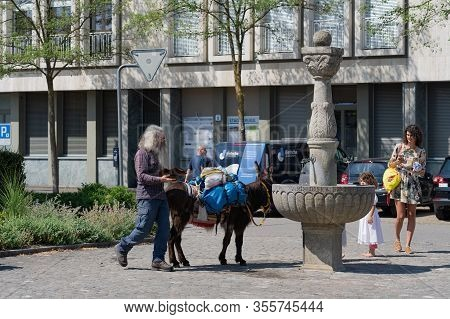 Bearded Man With Thirsty Donkey Passing Trough The Town Of Brugg During A Festival In Switzerland On